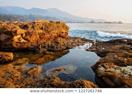 nierówny · wygaśnięcia · parku · plaży · kwiaty - zdjęcia stock © meinzahn