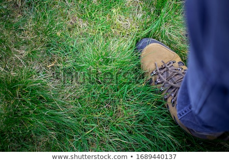 férfi · sétál · zöld · fű · erdő · zöld · nyár - stock fotó © ondrej83