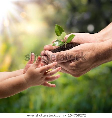Föld · emberi · kezek · fű · fák · pillangók - stock fotó © -baks-