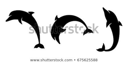 golfinho silhueta isolado vetor imagem branco ilustração