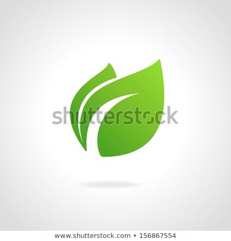 Eco hojas verdes vector símbolo diseno primavera Foto stock © blaskorizov