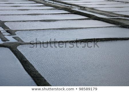 Sal do mar produção natureza paisagem tropical branco Foto stock © chris2766