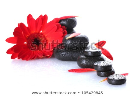 black spa stones and red gerbera flower isolated on white stock photo © tetkoren