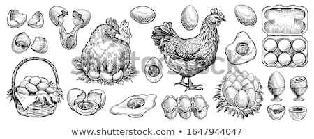 broken egg and shells line icon stock photo © rastudio