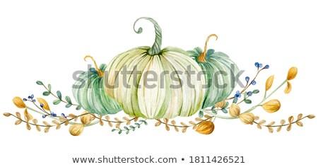 érett · sütőtök · izolált · fehér · gyümölcs · kert - stock fotó © shutswis
