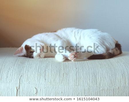 Aranyos macska közelkép portré álmos boldog Stock fotó © photocreo