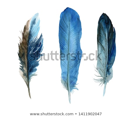 Watercolor blue feather on white Stock photo © vlad_star