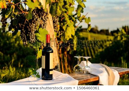 дегустация вин опыт деревенский погреб сомелье Сток-фото © stokkete