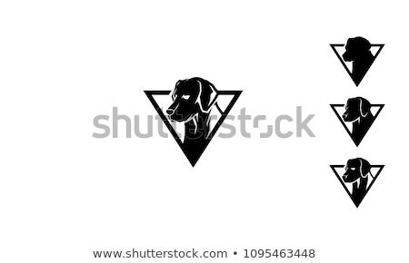 Rottweiler labrador retriever witte vrienden zwarte puppy Stockfoto © cynoclub