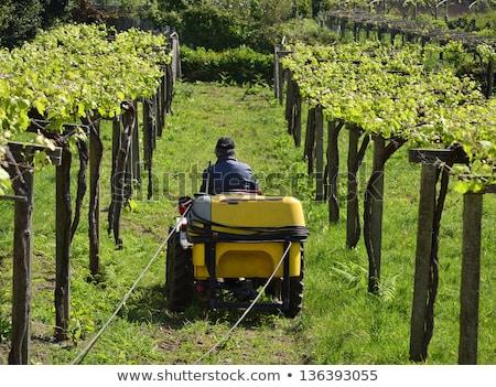 Wijn business werken trekker traditioneel Stockfoto © stefanoventuri