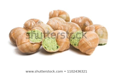 Helix pomatia also Roman snail, Burgundy snail Stock photo © cookelma