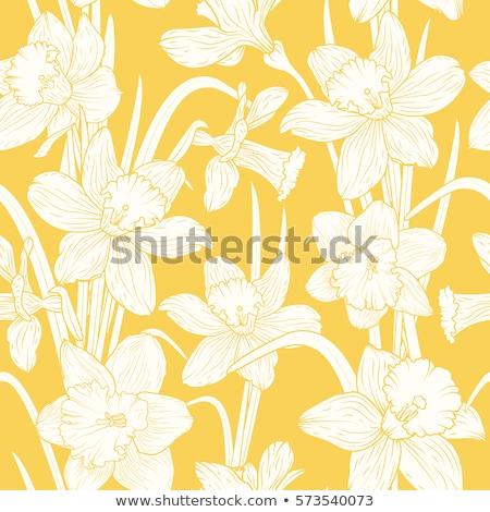 Naadloos ontwerp Geel narcis bloemen illustratie Stockfoto © colematt