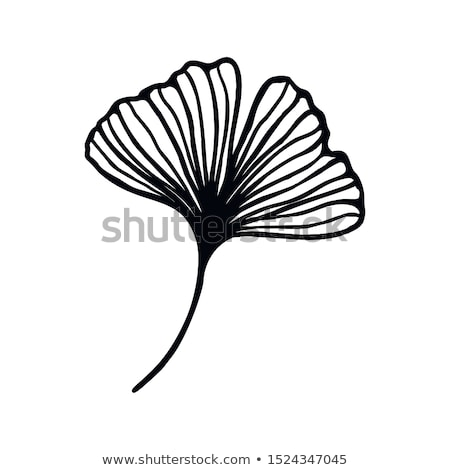 Design with green leaves of ginko biloba Stock photo © blackmoon979