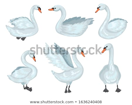 Family with Child Walking near Lake or Pond Vector Stock photo © robuart