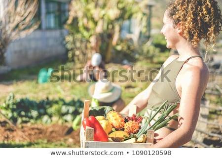Rolnictwa kobiet rolnik szklarnia pomidorów Zdjęcia stock © simazoran