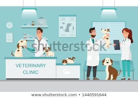 Weterynarz kliniki weterynaryjny usługi apteki zwierząt Zdjęcia stock © RAStudio