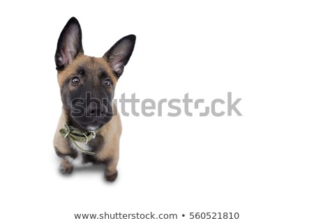Happy Dog Looking Up At His Master Stock photo © stuartmiles