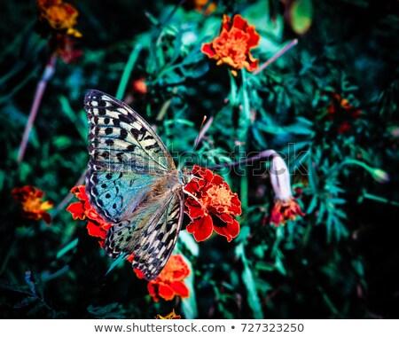 Foto stock: Detalhado · flor · primavera · jardim · verão · papel · de · parede