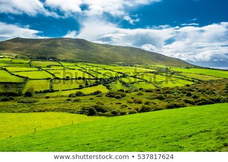 Hill hedge Stock photo © claudiodivizia