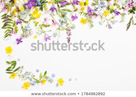 Lila vadvirágok fű absztrakt kék növény Stock fotó © emattil