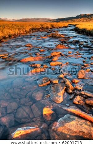 késő · nyár · este · vadon · víz · kék - stock fotó © Klodien