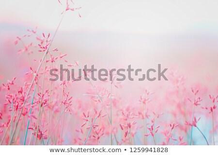 boom · aura · gekleurd · abstract · licht · achtergrond - stockfoto © sirylok