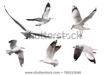 Gaviotas muchos sesión hierro barra aves Foto stock © manfredxy