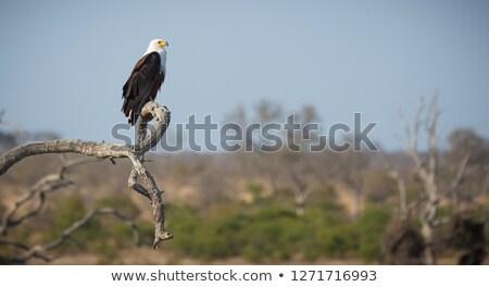 Wildlife at the waterhole Stock photo © dirkr