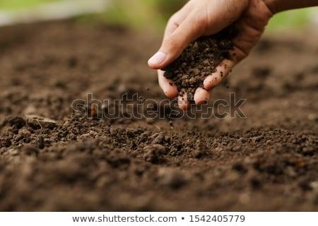 fertile · sol · blanche · fond · terre - photo stock © nito