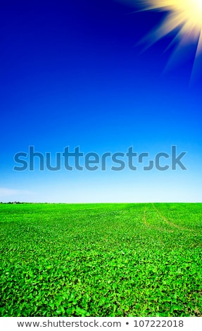 Amazing of soy plants in a cultivated farmers field.  Stock photo © lypnyk2