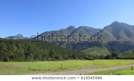 Foto stock: Montanha · cenário · montanhas · vinha · Cidade · do · Cabo · África · do · Sul