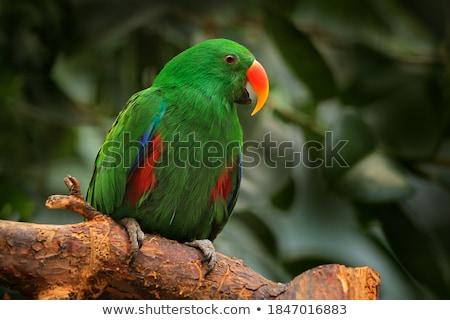 Belo vermelho papagaio sessão natureza pássaro Foto stock © mcherevan