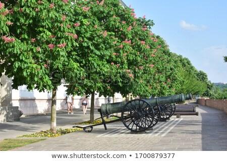 Velho ferro canhão Budapeste Hungria colina Foto stock © Zhukow
