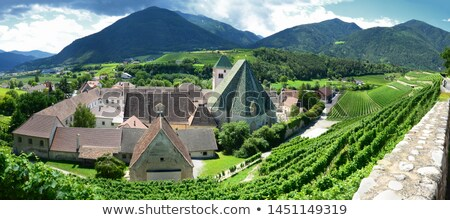 Vineyard in South Tyrol Stock photo © manfredxy