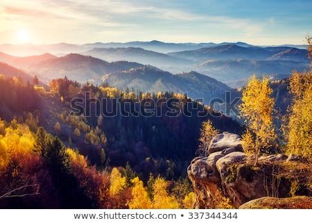 Sonbahar manzara huş ağacı dağlar sarı yaprakları Stok fotoğraf © Kotenko