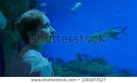 bezoekers · aquarium · illustratie · meisje · vis · glas - stockfoto © adrenalina