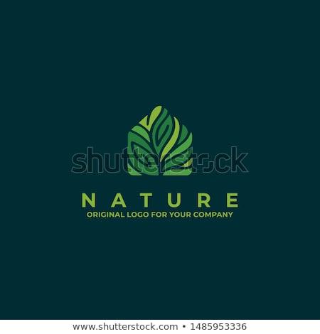 green clean house concept icon Stock photo © alexmillos