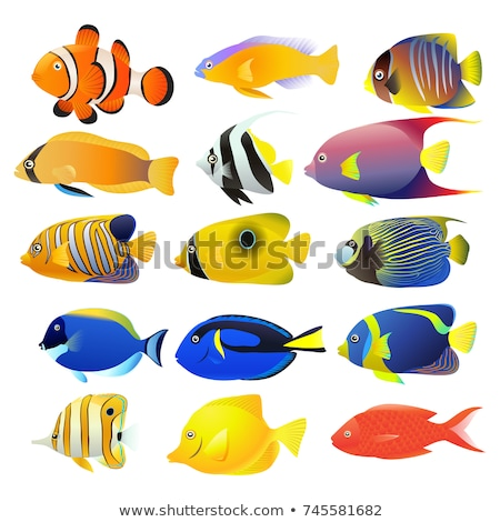 Set of Aquarium Fishes Color Vector Illustrations Stock photo © robuart