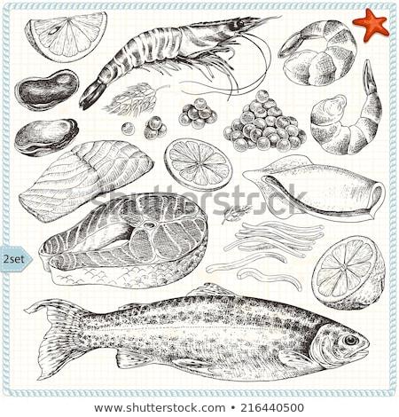 Shrimp Crustacean Hand Drawn Vector Illustration Stock photo © robuart