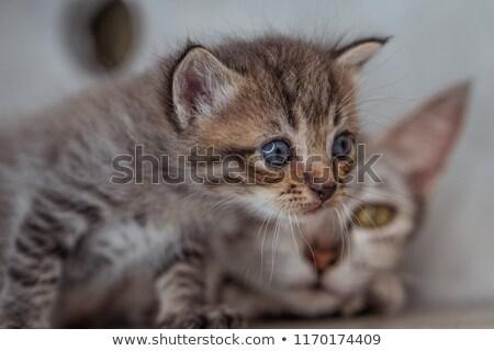 mother breast feeding baby over natural background Stock photo © dolgachov