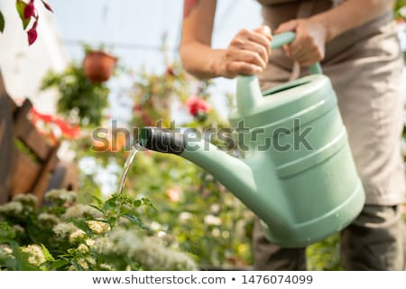 young gardener bending over flowerbed while watering plants in greenhouse stock photo © pressmaster
