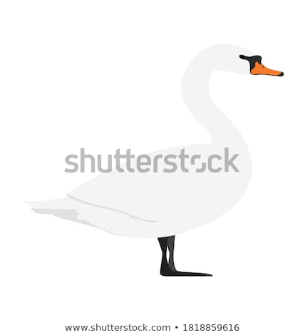 Denemarken dempen zwaan illustratie vleugel omhoog Stockfoto © lenm