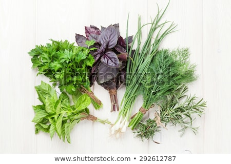 Green: green onions, dill and basil Stock photo © galitskaya