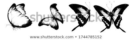 Fekete pillangó trópusi virágok ázsiai tavasz Stock fotó © calvste