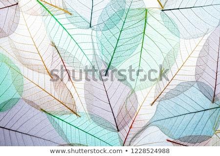Szett végtelenített áttetsző minták végtelenített minták színes Stock fotó © OlgaDrozd