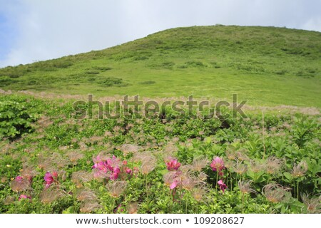 Grama natureza beleza verde ao ar livre Foto stock © yoshiyayo