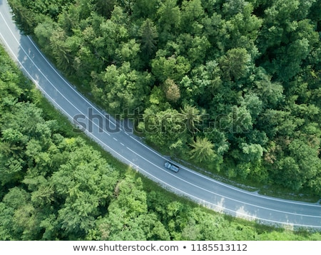 Long and winding road running through forests Stock photo © ozaiachin