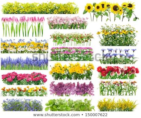 花壇 · 草 · 青空 · 庭園 · フィールド · 雲 - ストックフォト © foka