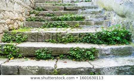 old overgrown stone wall Stock photo © prill