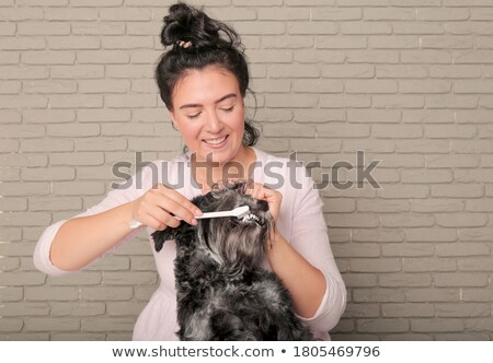 Little Girl and Her Mini Schnauzer Stock photo © StephanieFrey